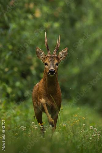 Fotomural deer movement