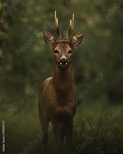 Staande foto Hert Dark deer in the woods