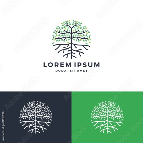 tree and root logo Fototapet