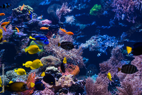 In de dag Koraalriffen tropical Fish. Underwater world landscape