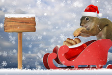 Red Squirrel Wearing A Santa H...