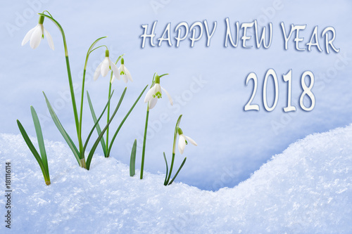 New year 2018 greeting card group of snowdrops happy new year text new year 2018 greeting card group of snowdrops happy new year text in english language m4hsunfo