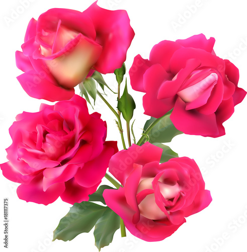 four-pink-isolated-roses-in-bunch