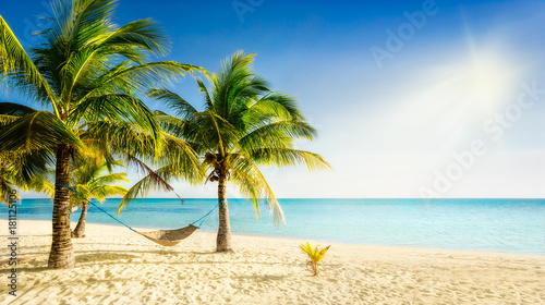 Foto op Canvas Strand Sunny carribean beach with palmtrees and traditional braided hammock