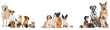 canvas print picture - Verschiedene Haustiere isoliert auf weißem Grund