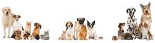 Verschiedene Haustiere Isoliert Auf Weißem Grund