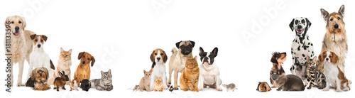 Fototapeta Verschiedene Haustiere isoliert auf weißem Grund