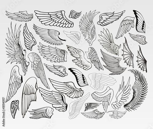 Fényképezés  Wings of Birds