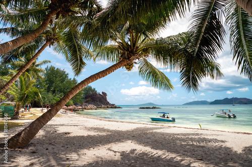 Fotomural  île curieuse
