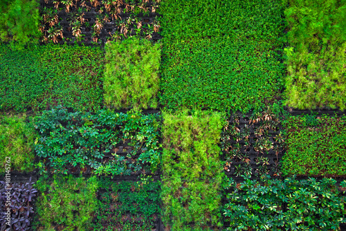 Poster Vegetal Green plant wall