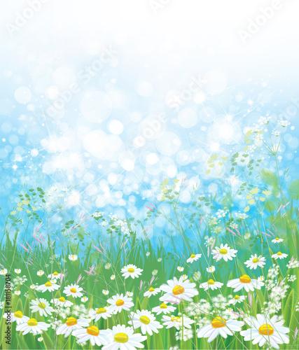 Wektorowy natury tło, chamomiles pole i błękitny pogodny niebo.