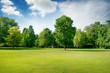 canvas print picture - Picturesque green glade in city park. Green grass and trees.