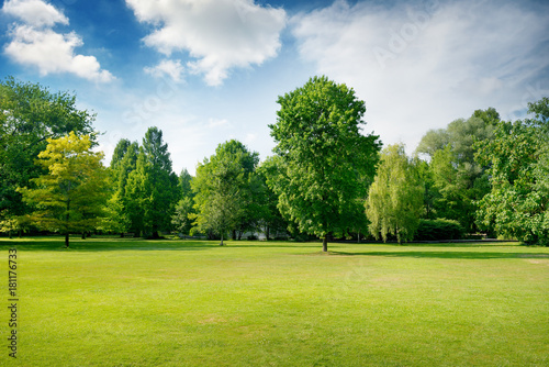 Obraz Picturesque green glade in city park. Green grass and trees. - fototapety do salonu