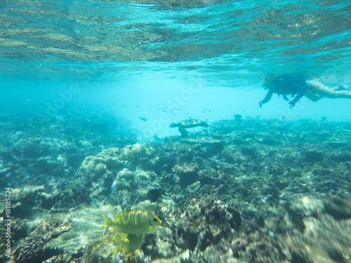 水中写真 シュノーケリング 海亀