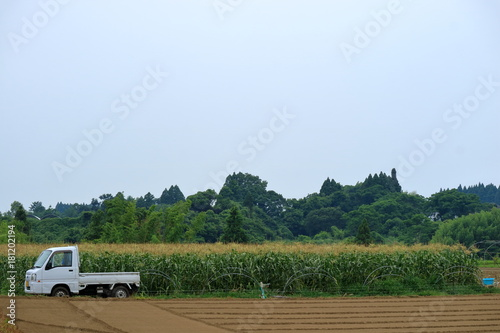 Foto  農業 軽トラックとスィートコーン畑