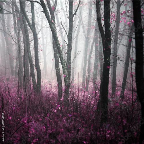las-w-fioletach-z-glebia