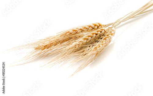 Papiers peints Graine, aromate pearls barley grain seed on background