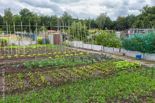 Allotment garden in early spring with runner bean canes, potatoes, onions and be Canvas Print
