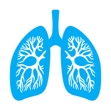 Lungs Diaphragm Vector Icon