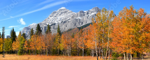 fototapeta na drzwi i meble Autumn Aspen trees in Canadian Rocky mountains