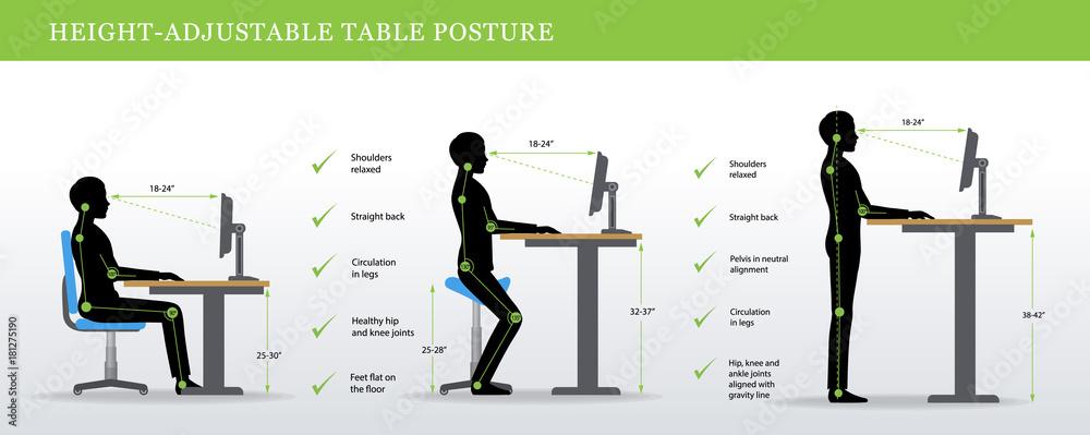 Fototapeta Height Adjustable and Standing Desks correct poses. Ergonomics healthy postures.