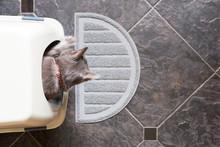 Grey Cat Using Litter Box