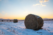 Rolls Of Hay On The Field Cove...