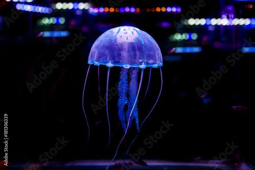 Fotografía  Jellyfish