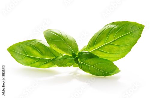 Obraz Fresh basil leaves isolated on white background. - fototapety do salonu