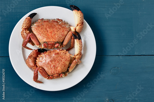 Two boiled stone crabs on white plates on a blue surface Canvas Print
