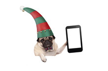 Christmas Pug Puppy Dog With Red And Green Elf Hat Holding Up Blank Tablet Or Mobile Phone, Hanging On White Banner, Isolated