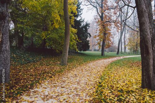 Foto op Canvas Herfst Path in autumn forest