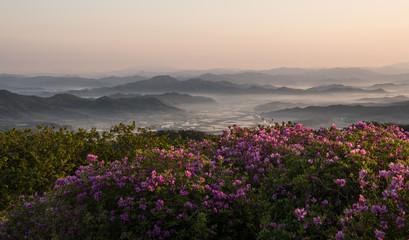 Fototapeta산 정상에서 본 철쭉꽃과 운해