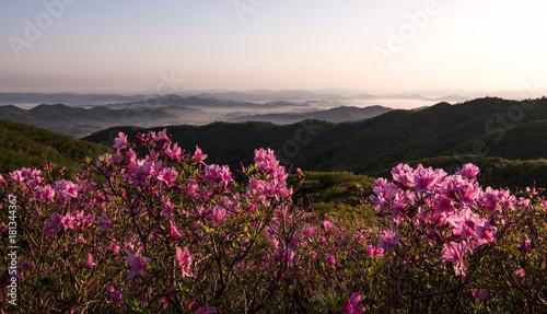 Tuinposter Purper 산 정상에서 본 철쭉꽃과 운해