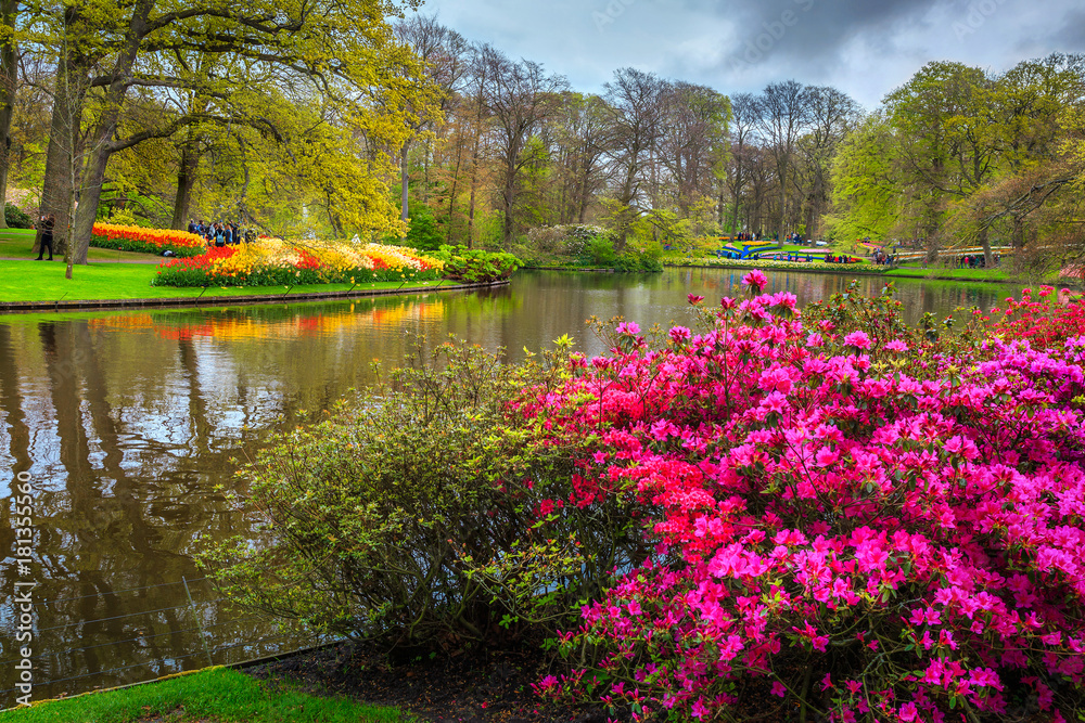 Fototapety, obrazy: Blooming tulips and colorful flowers in fabulous Keukenhof park, Netherlands
