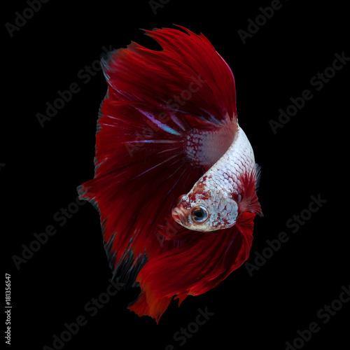Red dargon