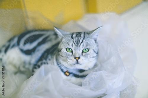 Zdjęcie XXL Kot gra w chowanego w plastikowej torbie
