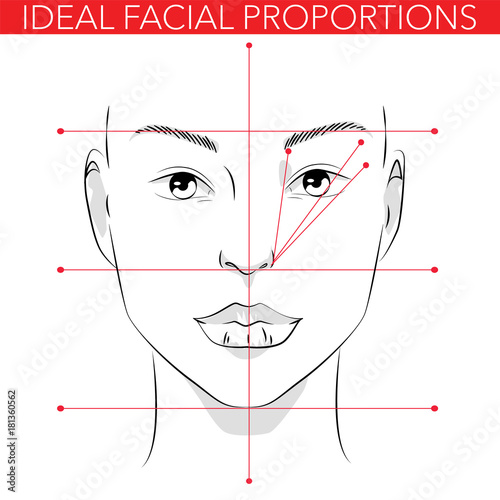 Ideal facial proportions Fotobehang