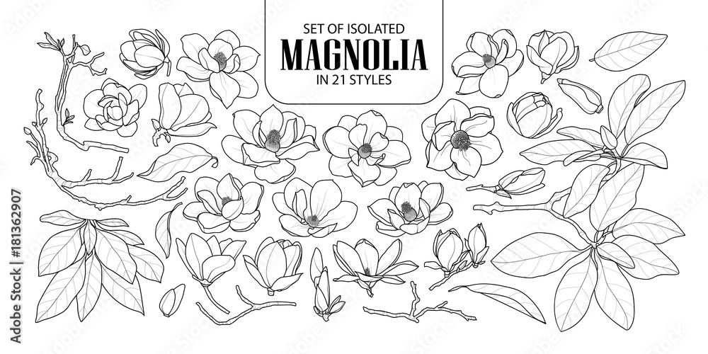Fototapety, obrazy: Set of isolated magnolia in 21 styles. Cute hand drawn flower vector illustration in black outline and white plane.