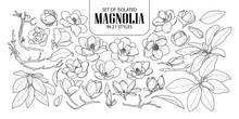 Set Of Isolated Magnolia In 21...