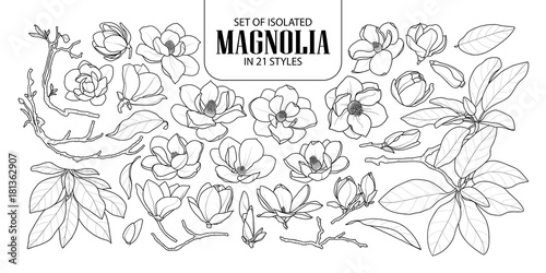 Set of isolated magnolia in 21 styles Wallpaper Mural