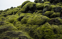 Landscape Of Icelandic Lava Field With Volcanic Rock Covered By Lush Green Moss
