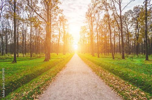 Foto op Canvas Weg in bos Autumn in the park. Autumn landscape. gold alley.