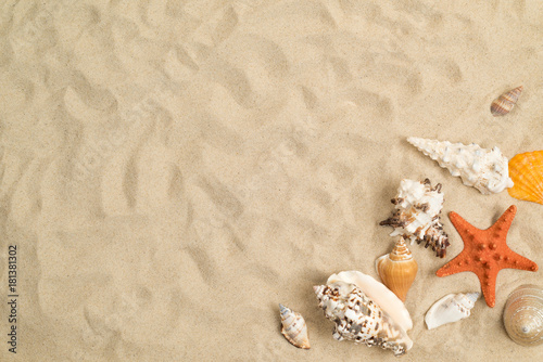 Cadres-photo bureau Tortue Seashells on sand with white paper in center
