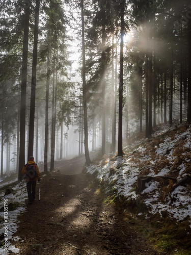 Foto op Plexiglas Landschappen The mountaineer walking through the mist of the dark dense spruce forest