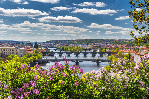 obraz PCV The blooming bush of lilac against Vltava river and Charles bridge, Prague