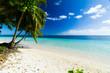 palm trees ocean beach samoa
