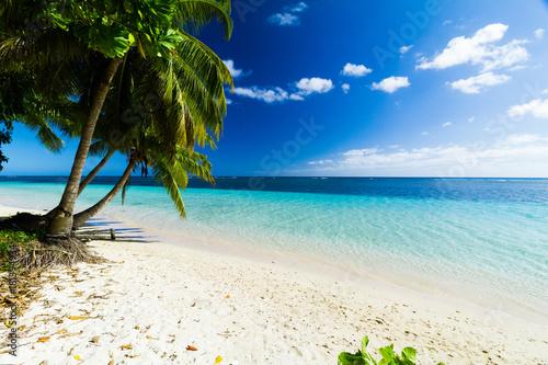 Poster Oceanië palm trees ocean beach samoa