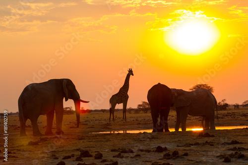 Foto op Aluminium Koraal tramonto all'abbeveratoio della savana