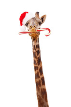 Christmas Giraffe With Candy C...